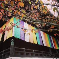 京都紅葉めぐり