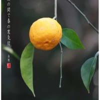 柚の実/京都水尾柚の郷