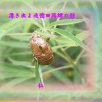 フォト575あそび『 湧き出よ追憶回路蝉の殻 』ypr2001