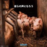 【デモ原稿】11/22(日) 種差別をなくそう 動物解放マーチ2020 in NAGOYA のデモ原稿はこちら☆彡