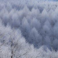 霧氷という芸術