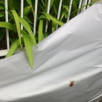 「蝉の巣立ち」と「高齢者の豪雨犠牲」を重ねて考える
