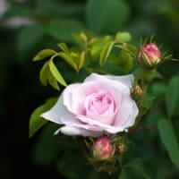 「自分を憐れんではなりません…」エドガー・ケイシー珠玉のリーディング