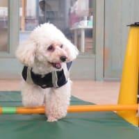 犬の情報が満載!ペットの情報番組「Crystal ZOOLAND」は毎月第2水曜日  犬のしつけ教室@アロハドギー