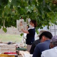 シャインマスカット栽培技術研修会を開催しました