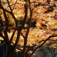 小國神社の見上げる紅葉