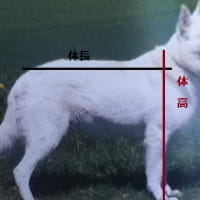 犬種図鑑の読み方