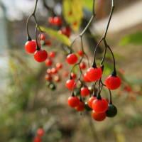 宇都宮森林公園の美しい紅葉と花と実 2020/11
