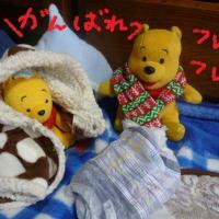 今日は病院で点滴の老犬ラスさん o(´^`)o ウー