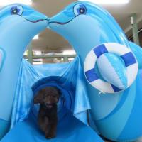 今日は【わんこ整体】day♪  犬のしつけ教室@アロハドギー