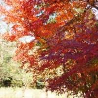 大町自然観察園の紅葉