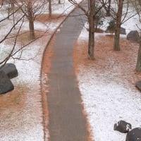 雪の山田池公園 (3)