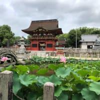 伊賀八幡宮 ハスの花