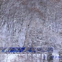 林の向こうに青いSR1系