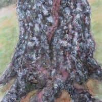 楽描き水彩画「サクラの幹を覆う白い斑点模様」