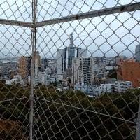立派です❗千葉城🏯✨✨