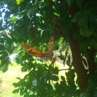 a cicada on a spider web