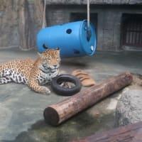 動物園に行ってきました‼️