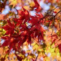 木の葉色づく散歩道