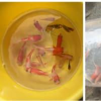 私と池の魚たち     雑感
