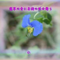 『 露草の青に妄詩の妖女舞う 』遊行俳句で交心hrp1203