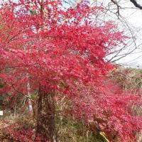 『花貫渓谷~汐見滝吊り橋』の紅葉を見に行ってきました@茨城県高萩市