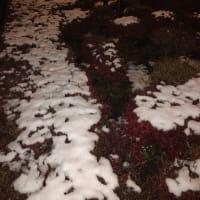 雪、そしてカニ