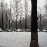雪が降ってます