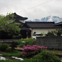 曇り空でも残雪立山はくっきり見えます、コデマリやテッセンの花・・・富山市水橋