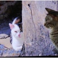 「ネコ歩き」を見つめる