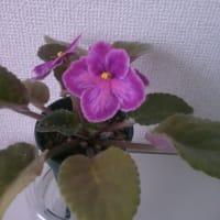 その他開花中