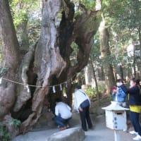 ブラ散歩~熱海海岸・熱海城・来宮神社
