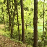 大池いこいの森 周辺ランニング