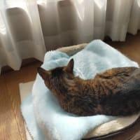 今日は「猫の日」