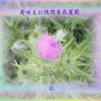 『 老ゆえに恍惚自在夏薊 』瘋癲老仁妄句zqs2304