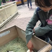 サービス精神旺盛すぎ、な福岡市動物園のチンパンジー
