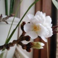 【春の不調の予防と対策】