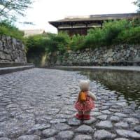 久しぶりの朝のお散歩。緑したたる「下鴨神社」の「糺の森」。