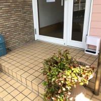 学校も始動ですね...!    筑紫野市原田 のりこキッズマム歯科医院