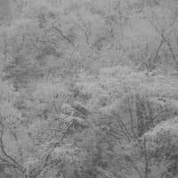 雪模様(2020-1-18)