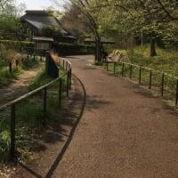 今日の散歩 赤羽自然公園