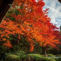 京都の紅葉が見頃で綺麗でした(2019年11月26〜29日)