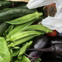 【家庭菜園】夏野菜とブルーベリーを収穫しました~ストレス解消になったかも♪