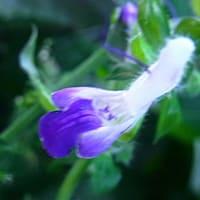 庭の花が草と競争で・・・・