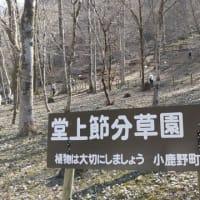 春を探して・初春の秩父路(福寿草と節分草園)