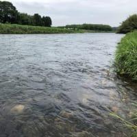 那珂川で『これぞ、鮎釣り』を体感。 - 鮎釣りと薔薇づくり