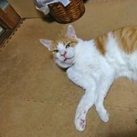 7月3日(金) ~猫の麦とごまの日常日記~