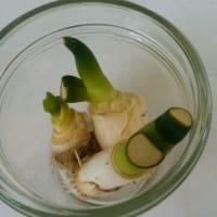 かんたん野菜作りはじめました。