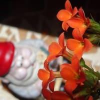 六月の風にゆれる花々に