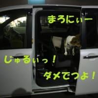 逃げるな!!